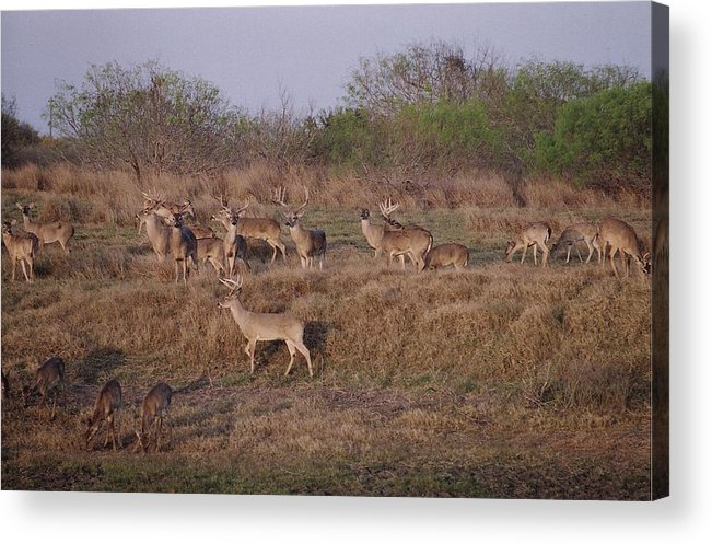 Deer Acrylic Print featuring the photograph Private Ranch 1 by Wendell Baggett