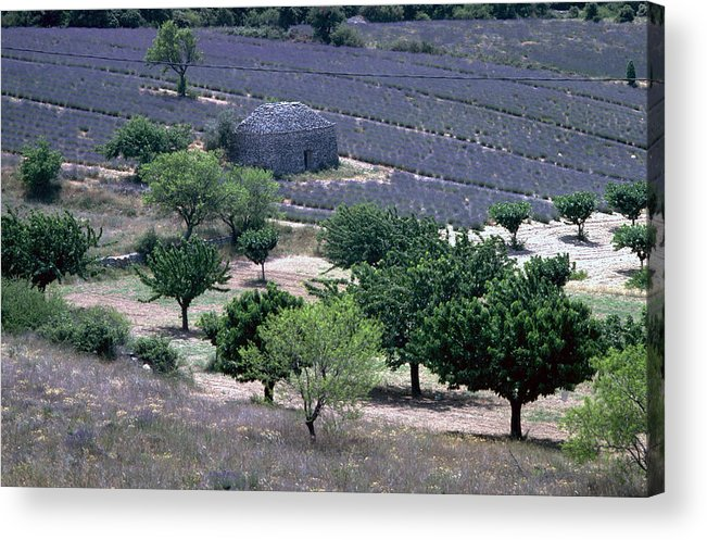 Provence Acrylic Print featuring the photograph Provence by Flavia Westerwelle