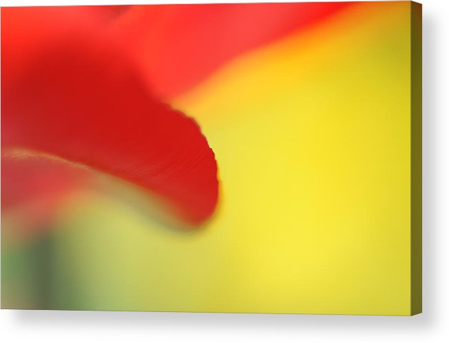 Abstrac Acrylic Print featuring the photograph Red And Yellow by Catherine Lau
