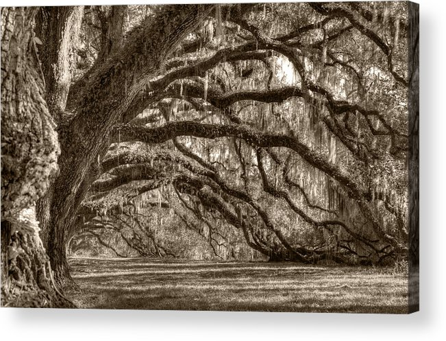Live Oak Acrylic Print featuring the photograph Southern Live Oak Trees by Dustin K Ryan