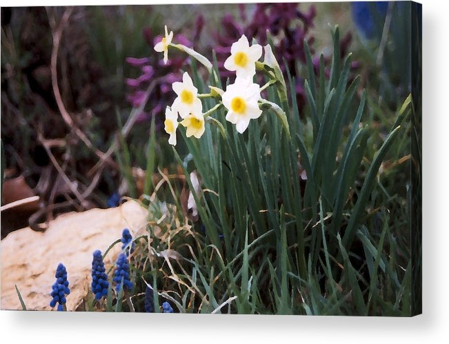 Flowers Acrylic Print featuring the photograph Spring Garden by Steve Karol