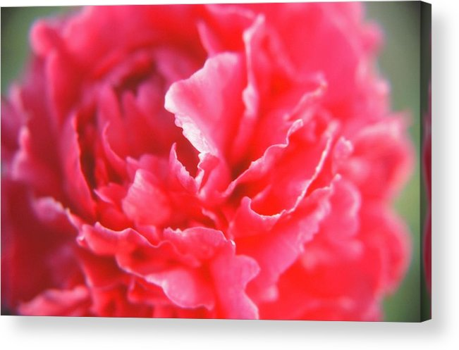 Flower Acrylic Print featuring the photograph Touch Of Class by Jonathan Michael Bowman
