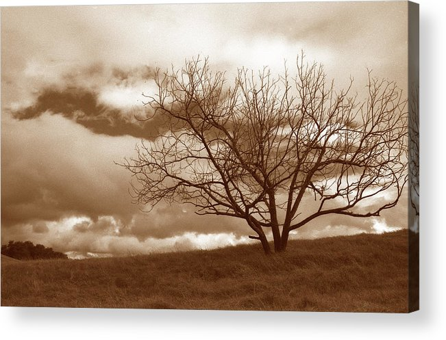 Trees Acrylic Print featuring the photograph Tree In Storm by Kathy Yates