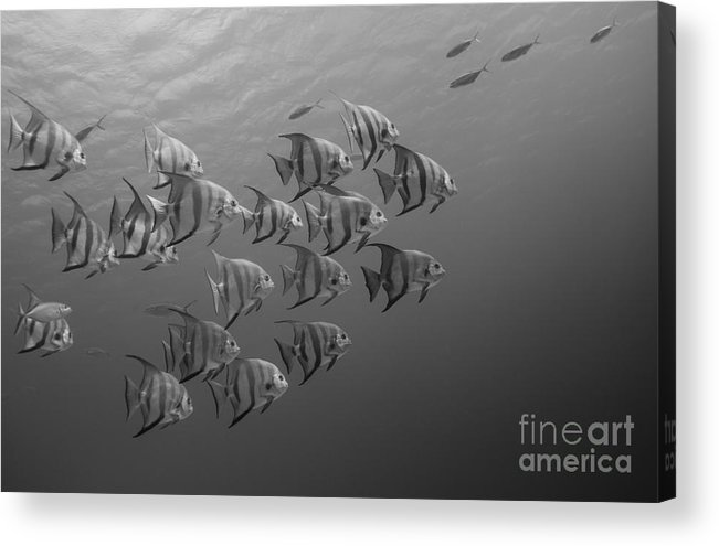 Photography Acrylic Print featuring the photograph Tropical Black And White by Ryan Ware