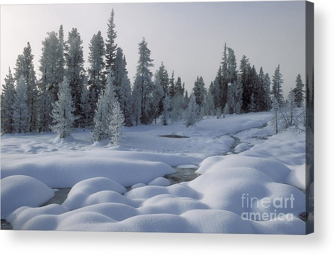 Yellowstone Acrylic Print featuring the photograph West Thumb Snow Pillows by Sandra Bronstein