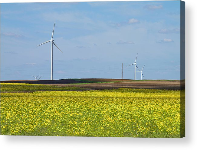 Environmental Conservation Acrylic Print featuring the photograph Fields Of Gold by Straublund Photography