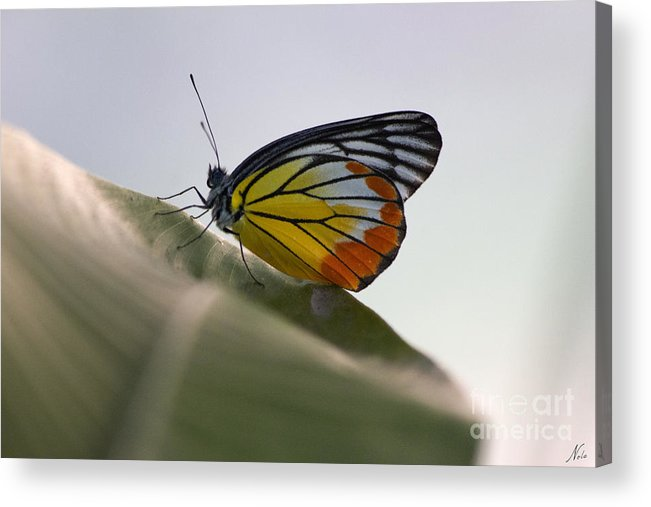 Thailand Acrylic Print featuring the photograph Thai Beauty On A Leaf by Nola Lee Kelsey