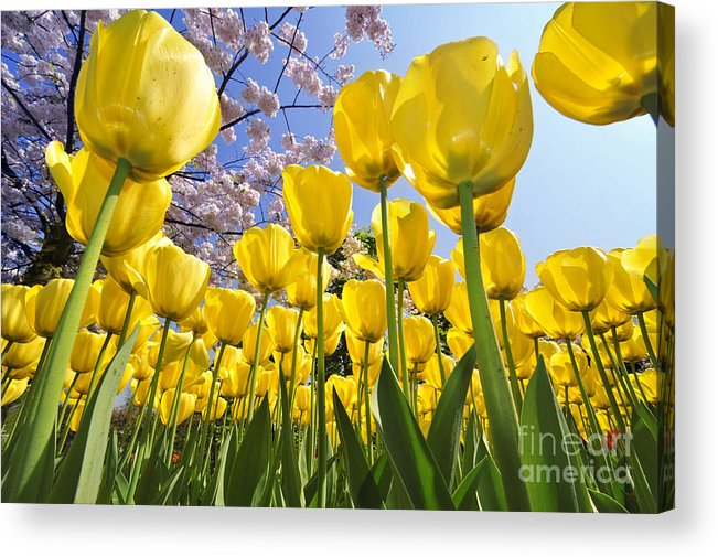 Colourful Acrylic Print featuring the photograph 090416p030 by Arterra Picture Library