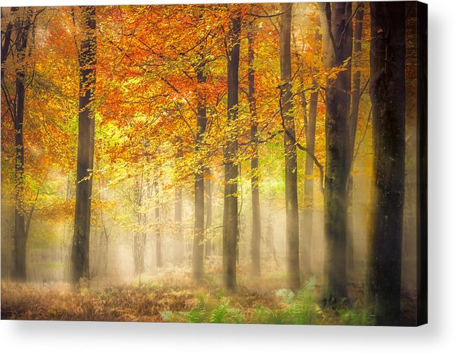 Woodland Acrylic Print featuring the photograph Autumn Gold by Ian Hufton