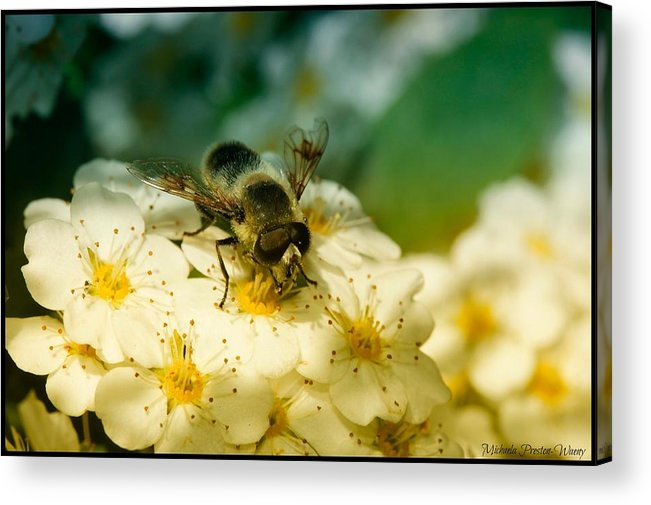 Nature Acrylic Print featuring the photograph Beauty Of Life by Michaela Preston