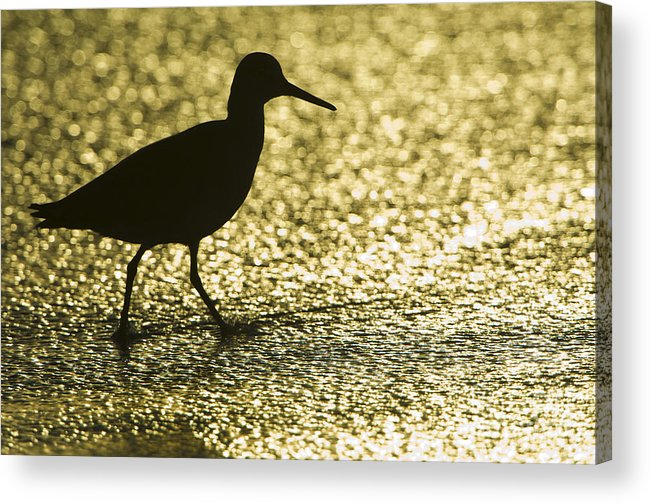 Nature Acrylic Print featuring the photograph Bird Silhouette by John Shaw