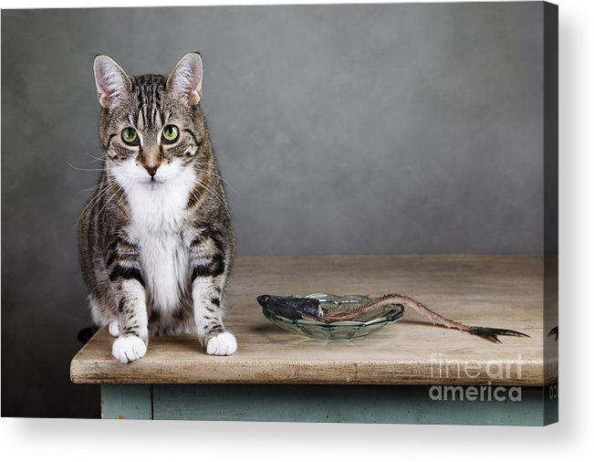 Cat Acrylic Print featuring the photograph Caught In The Act by Nailia Schwarz
