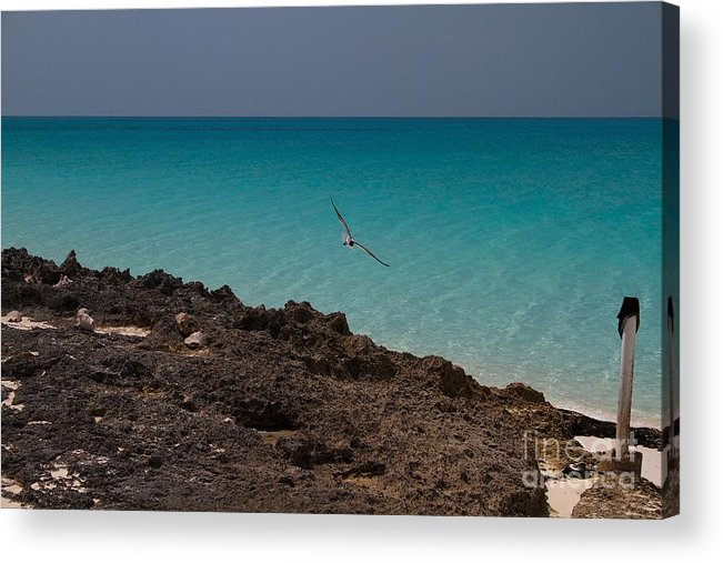 Caribbean Acrylic Print featuring the photograph Gull Riding The Wind by Cheryl Hurtak