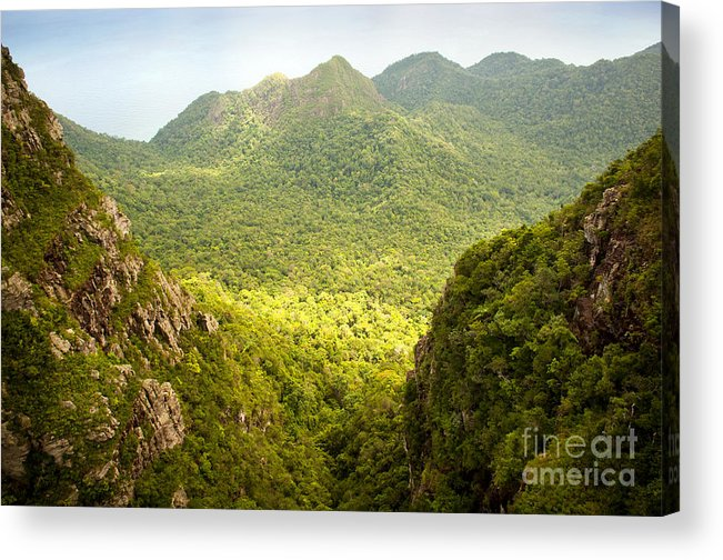 Malaysia Acrylic Print featuring the photograph Jungle Landscape by Tim Hester