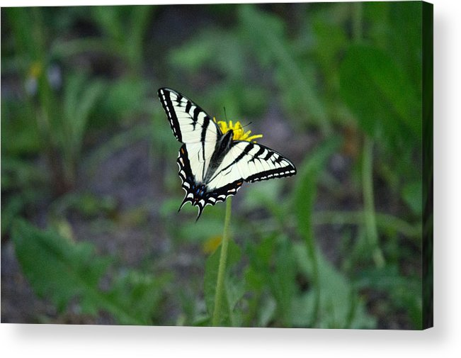 Butterfly Acrylic Print featuring the photograph On A Flower by Linda Kerkau