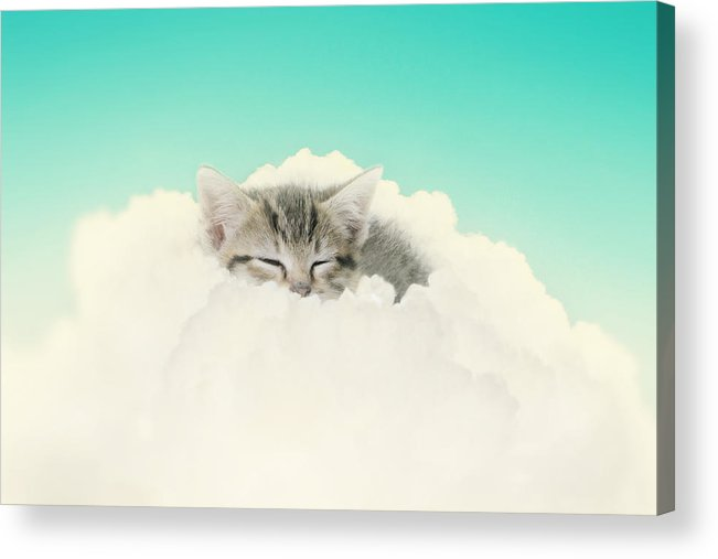 Kitten Acrylic Print featuring the photograph On Cloud Nine by Amy Tyler