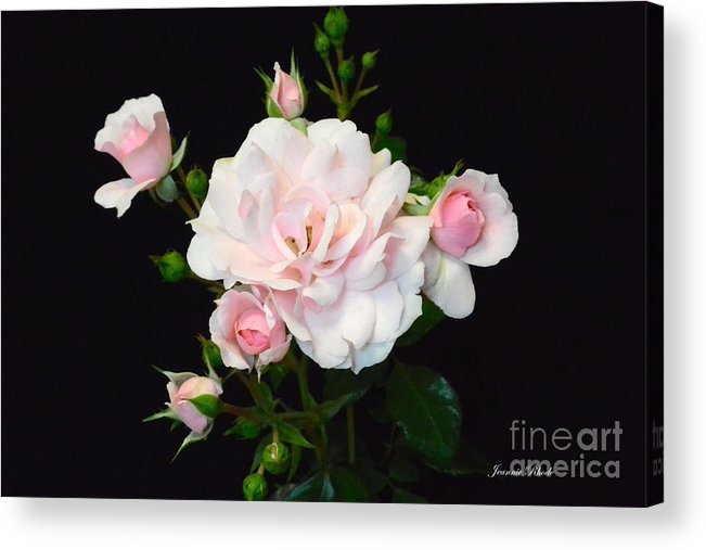 Pretty In Pink Acrylic Print featuring the photograph Pretty In Pink by Jeannie Rhode