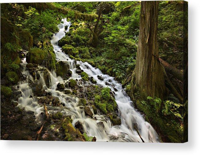 Wahkeena Creek Acrylic Print featuring the photograph Wahkeena Creek by Mary Jo Allen
