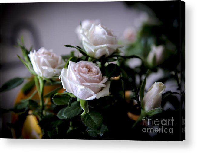 Rose Acrylic Print featuring the photograph Eternal Rose by Sheree Lauth