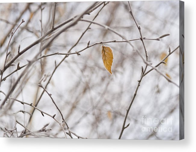Pacific Northwest Acrylic Print featuring the photograph Autumn Leaf by Jim Corwin