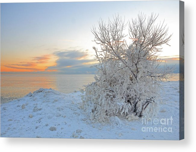 Cold Acrylic Print featuring the photograph Cold Morning by Charline Xia