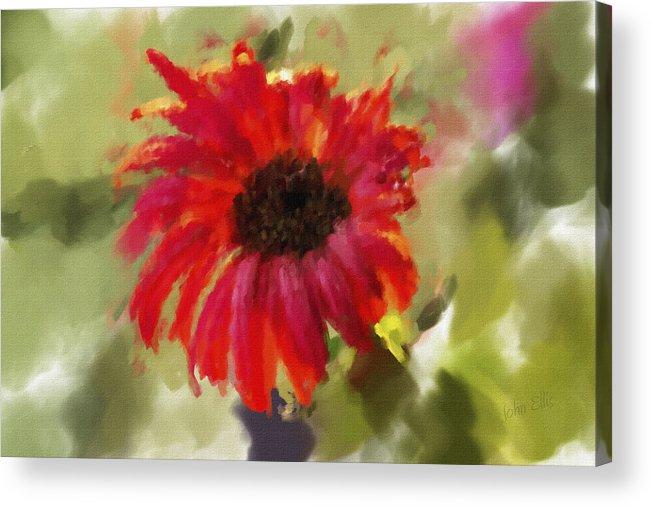 Flower Acrylic Print featuring the photograph Shazamm by John Ellis