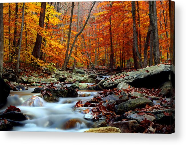 Autumn Acrylic Print featuring the photograph Truth by Mitch Cat