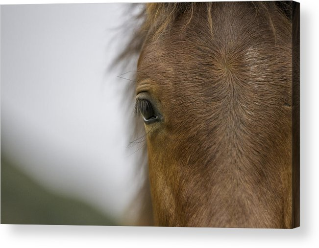 : Mustang Photographs Photographs Acrylic Print featuring the photograph Wild Horse Colt by Meg Frederick