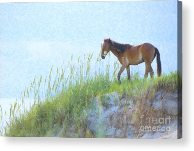 Horse Acrylic Print featuring the photograph Wild Horse On The Outer Banks by Diane Diederich