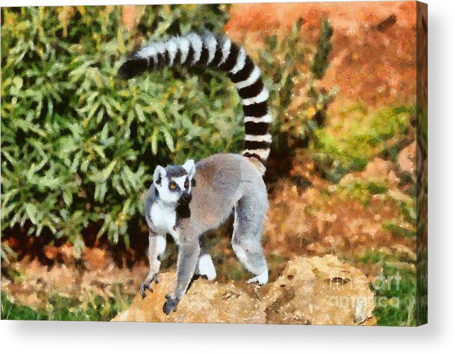 Ring Tailed Lemur Acrylic Print featuring the painting Ring Tailed Lemur by George Atsametakis