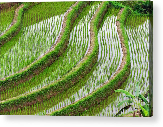 Agriculture Acrylic Print featuring the photograph Water-filled Rice Terraces, Bali by Keren Su