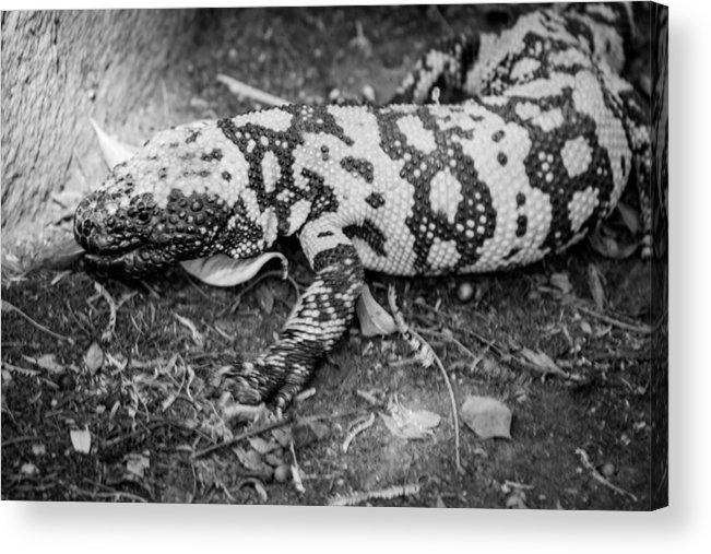 Reptiles Acrylic Print featuring the photograph Hiss by Marit Runyon