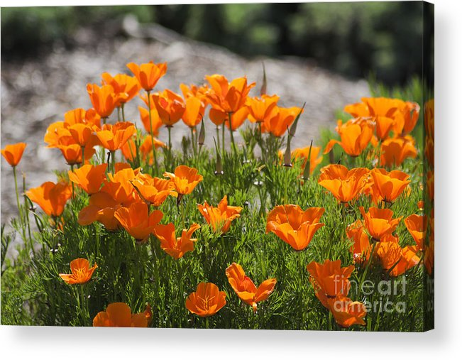 Print Acrylic Print featuring the photograph 547 Cf Orange Green And Gray by Chris Berry