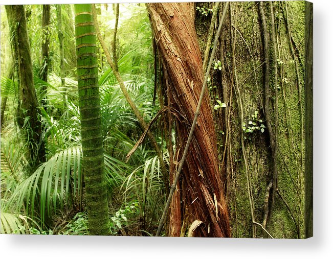 Forest Acrylic Print featuring the photograph Jungle by Les Cunliffe