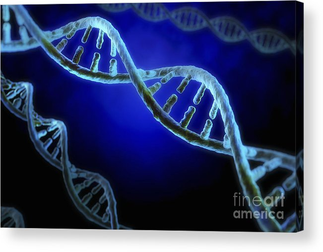 Digitally Generated Image Acrylic Print featuring the photograph Dna by Science Picture Co