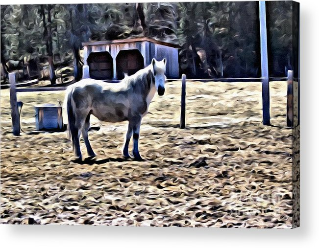 Whit Horse Acrylic Print featuring the photograph 9304 by Charles Cunningham