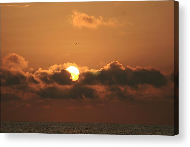 Sun Acrylic Print featuring the photograph A Bed For The Sun by David Rosenthal
