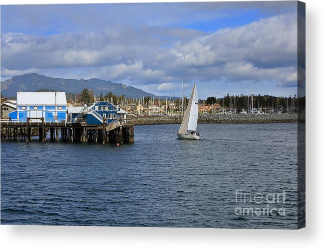 Sidney Acrylic Print featuring the photograph A Sailing Yacht Passes The Wharf In Sidney Harbour by Louise Heusinkveld