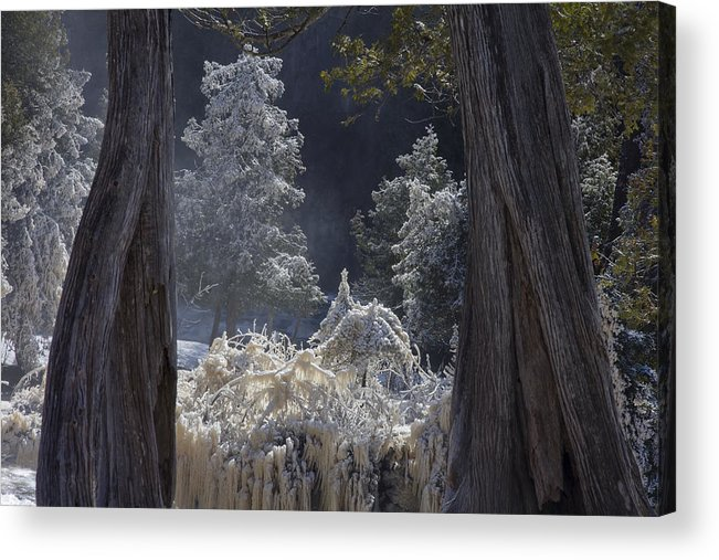 north Woods fairy Tale gooseberry Falls gooseberry River lake Superior minnesota northern Minnesota north Shore river spring Melt spring cedars river Spray ice woods magical magnificent wow nature greeting Cards mary Amerman Acrylic Print featuring the photograph A Twisted Fairy Tale by Mary Amerman
