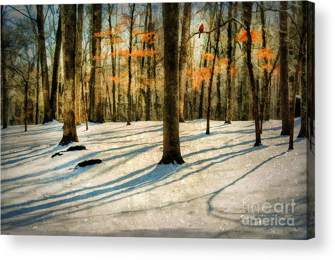 Bird Acrylic Print featuring the photograph A Touch Of Autumn by Darren Fisher