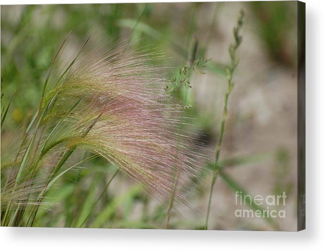 Nature Acrylic Print featuring the photograph A Touch Of Pink by Bianca Nadeau