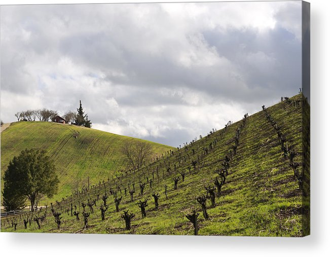 Vineyards Acrylic Print featuring the photograph A View From Nadeau by Mike Herdering