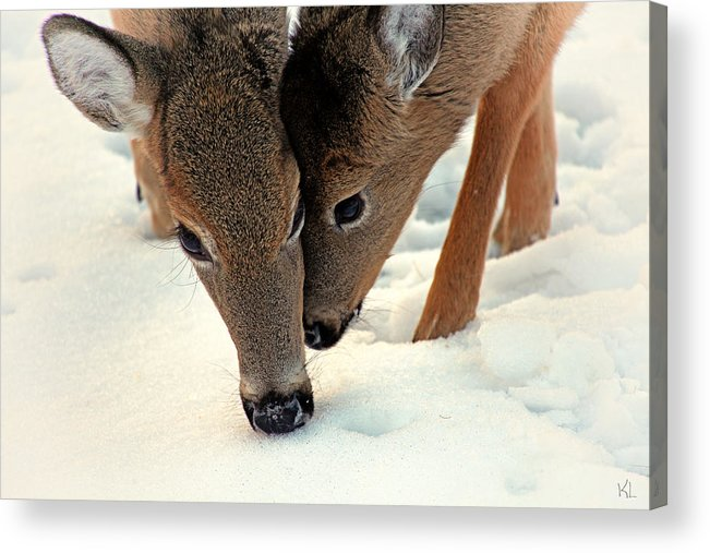 Two Acrylic Print featuring the photograph Adoring Love by Karol Livote