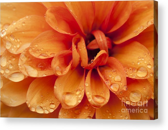 Abstract Acrylic Print featuring the photograph After The Rain by Anne Gilbert