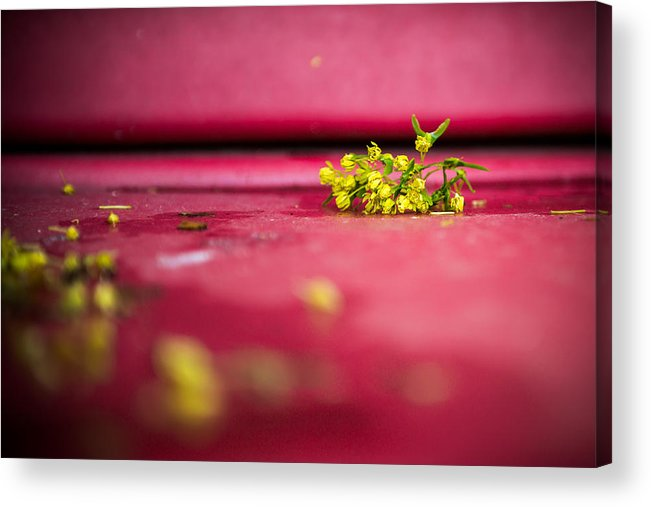 Storm Acrylic Print featuring the photograph After The Storm by Courtney Wilson