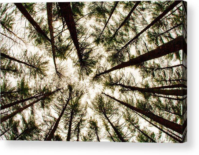 Trees Acrylic Print featuring the photograph Among The Trees by Kristia Adams
