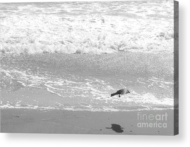 Beach Acrylic Print featuring the photograph As The Crow Flies by Artist and Photographer Laura Wrede