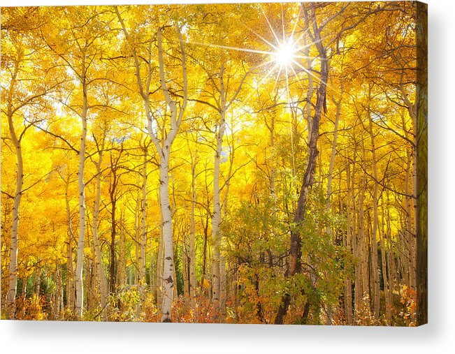 Aspens Acrylic Print featuring the photograph Aspen Morning by Darren White