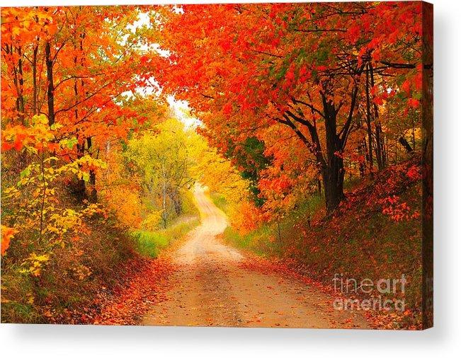 Autumn Acrylic Print featuring the photograph Autumn Cameo 2 by Terri Gostola