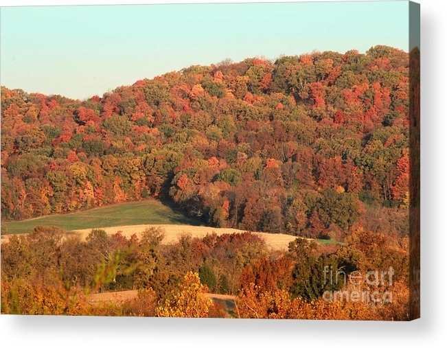 Autumn Acrylic Print featuring the photograph Autumn Color On Rolling Hills by Adam Long